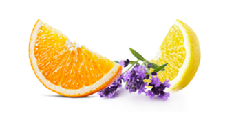 Biercée Floral Dry Gin nez