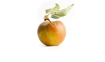 nez vieille-pomme